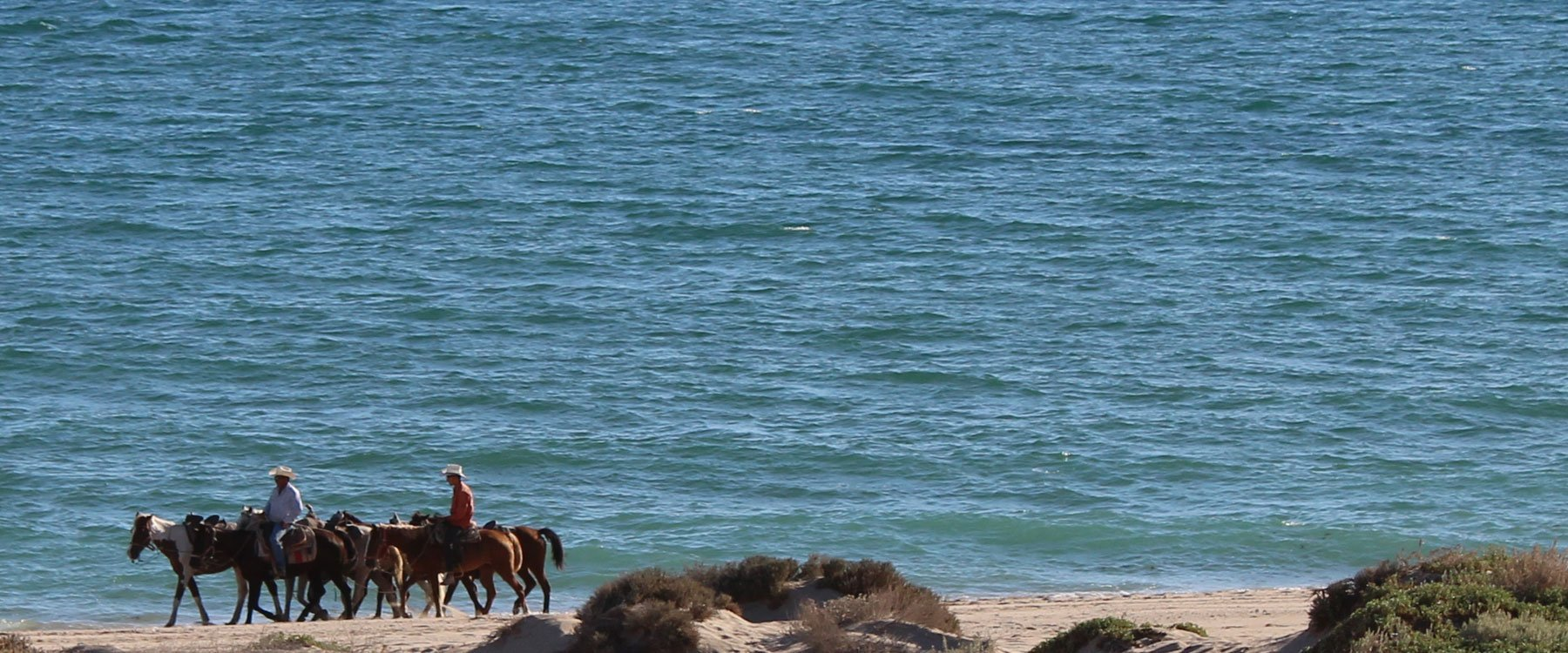 Horseback riding in Puerto Penasco (Rocky Point Mexico) is definetely available.